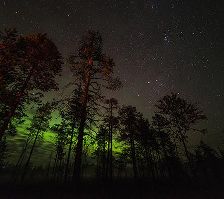 noche-natura